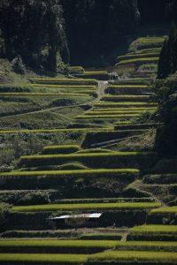 熊本県|人吉市|大和一酒造元|球磨焼酎|米焼酎|焼酎|温泉焼酎|夢|棚田
