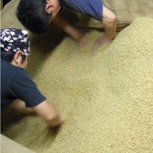 玄米 焼酎 玄米焼酎 球磨焼酎 床もみ 